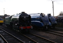 60532 BLUE PETER + 4489 DOMINION OF CANADA + 60008 DWIGHT D. EISENHOWER - 8-2-14 - Barrowhill Roundhouse
