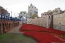 Blood Swept Lands and Seas of Red - 8-11-14 - Tower of London (3)