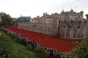 Blood Swept Lands and Seas of Red - 8-11-14 - Tower of London (41)