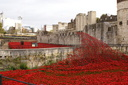 Blood Swept Lands and Seas of Red - 8-11-14 - Tower of London (31)