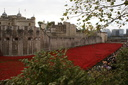 Blood Swept Lands and Seas of Red - 8-11-14 - Tower of London (40)