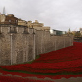Blood Swept Lands and Seas of Red - 8-11-14 - Tower of London (6)