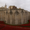 Blood Swept Lands and Seas of Red - 8-11-14 - Tower of London (8)